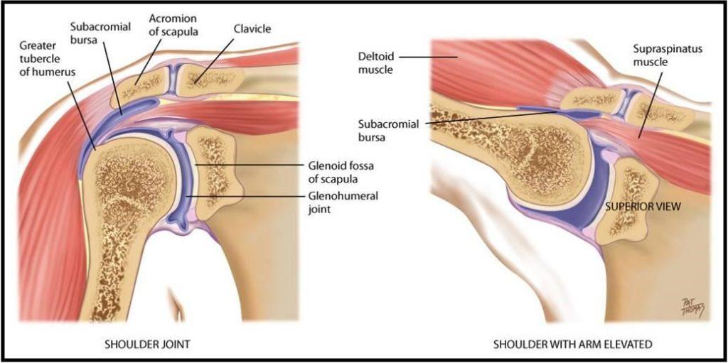 Shoulder anatomy pain